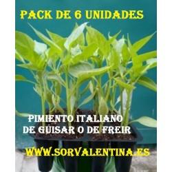 Planta pimiento italiano dulce PACK 6 UNIDADES