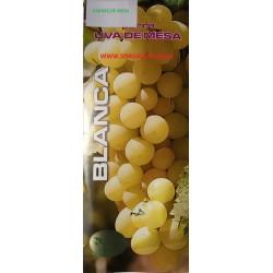 Parras de mesa, variedad Doña María.  Buen tamaño, es una uva amarillo brillante, muy productivas.