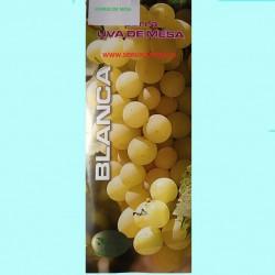 Parras de mesa, variedad Eva. Buen tamaño, es una uva dorada, de tamaño medio de forma redonda.