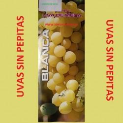 Parras de mesa. Variedad  Uvas sin pepitas. Fruto: Tamaño mediano , es una uva color amarillo y my dulce.
