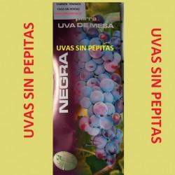 Parras de mesa. Uvas sin pepita , Autumn-Royal. Es la variedad de uvas sin pepita de mayor tamaño.