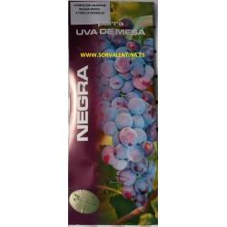 Parras de mesa, variedad Michelli Paliei Buen tamaño, es una uva violácea oscura, muy vigorosa y productiva.
