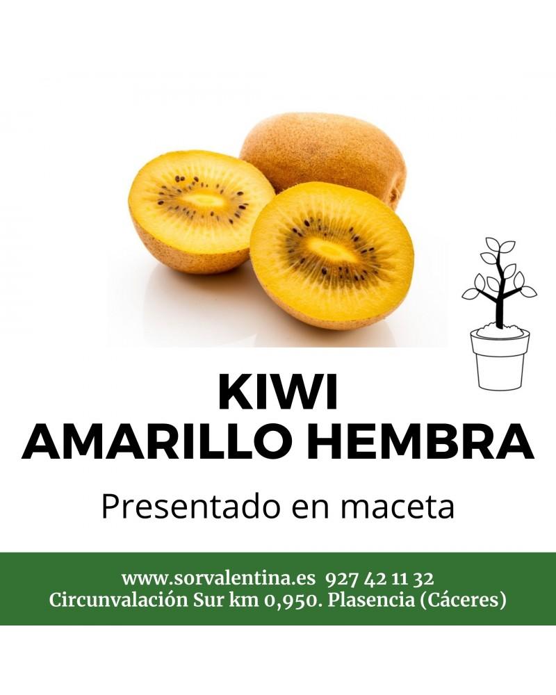 Envío Planta De Kiwi Amarillo Hembra En Maceta A Toda La Península
