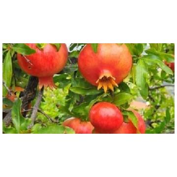 Frutales a raíz limpia o raíz desnuda, envíos a toda la península.