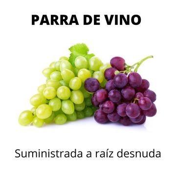 Planta de viña, planta de vid, planta de uvas, barbados