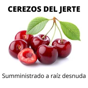 Cerezo del Jerte, a raíz limpia o Raíz desnuda  , Bourlat, 4/70,  Navalinda, Garnet, Ambrunés, Big Starking.