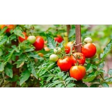 Envío a toda la península de plantas de huerto de primavera cultivadas en bandejas y servidas en cepellón.