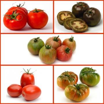Envío de plantones de Tomateras cultivados en bandeja y servidos en cepellón a toda la península en formatos de 10, 25, 50, 75, 100, 150 y 200 Unidades.