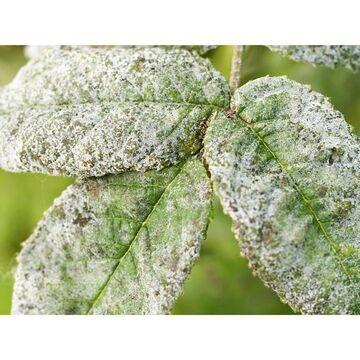 Envío online fungicida ecológico a toda la península