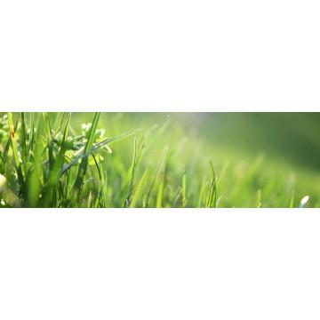 Envio de herbicidas para eliminar las malas hierbas