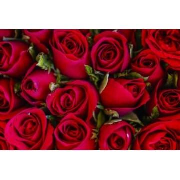 Envio de ramos de flores en Plasencia y localidades cercanas.